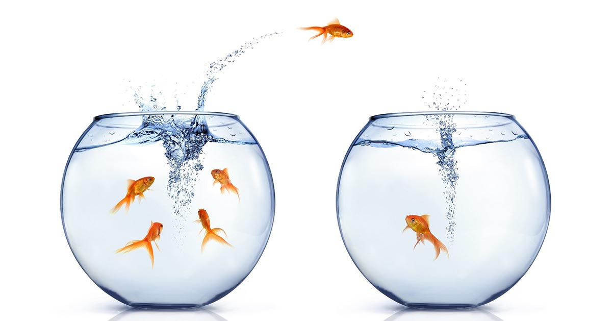 Image of two fishbowls, with a goldfish jumping out of one of the bowls to the other