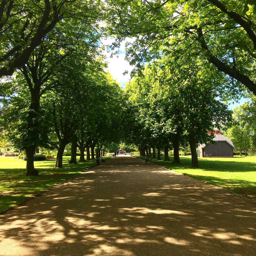 A photo of trees in Albert Park in the sunshine